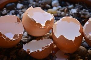 broken-eggs-1711144_640