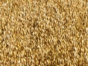 field-8948_1920